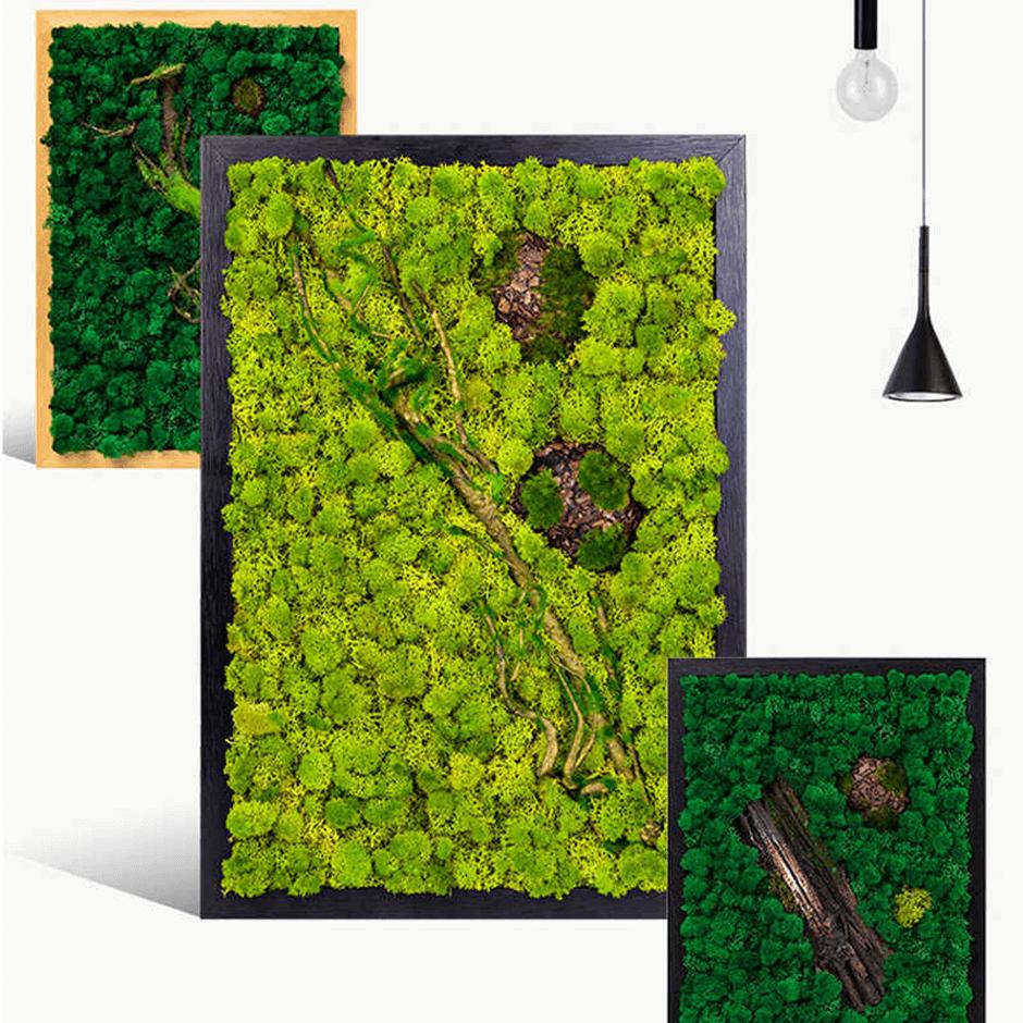 green frames - Taskmasters