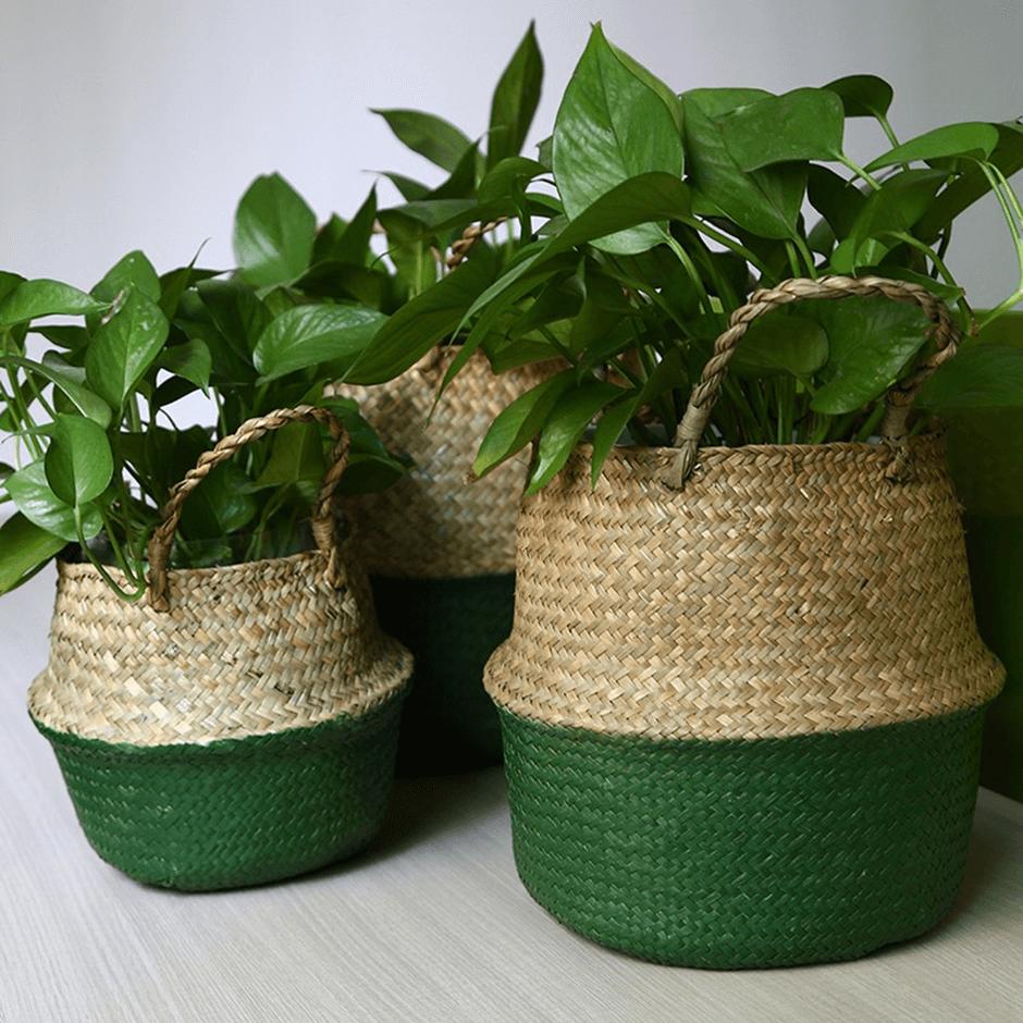 green pots - Taskmasters